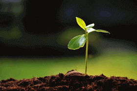Planting the Seed of Long-term Serving Benefits